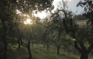 <em>Guido N. Zingari, giugno2014, Montececeri. Oliveto presso Prato ai Pini</em>