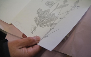 Guido N. Zingari, maggio 2014, Compiobbi. Disegni botanici